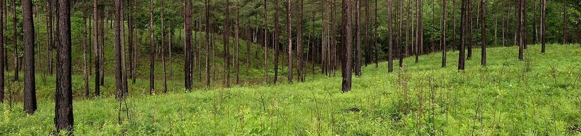 Image Result For Paulding Forest Wma