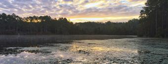 Gordonia-Alatamaha State Park