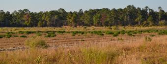 Dove Field