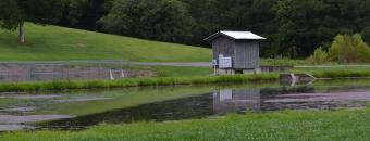 Summerville Hatchery Pond