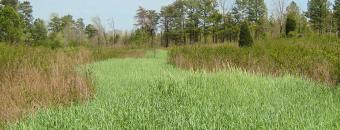 clover and rye strip at J.L. Lester Wildlife Management Area